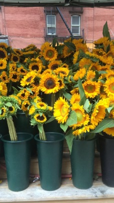 sunflowers nyc '15