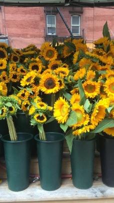 sunflowers nyc '15